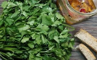 Можно ли есть кинзу при гв? Вкусные и полезные рецепты с кинзой кормящей маме