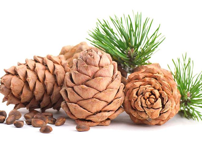 Употребление кедровых орешков во время грудного вскармливания может быть весьма полезно как маме, так и малышу