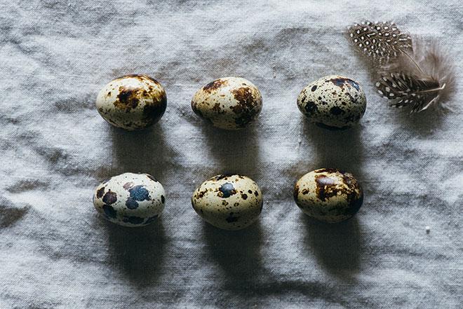 Так выглядят яйца перепелок