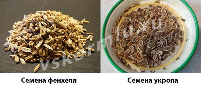 Внешний вид семян фенхеля и укропа пахучего
