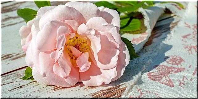Варенье из лепестков роз очень полезно и имеет ни с чем не сравнимый вкус, однако оно может вызвать аллергию у грудничка, поэтому будьте осторожны при введении его в рацион